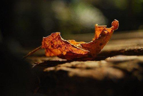 maledetto autunno